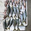 Hiroさんの福井県での釣果写真