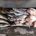 ハルワカパパさんの福井県での釣果写真