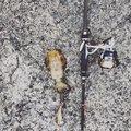 メジャクラ大好きアングラーさんの大阪府泉佐野市での釣果写真