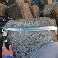 ゆきちさんの鹿児島県出水市での釣果写真