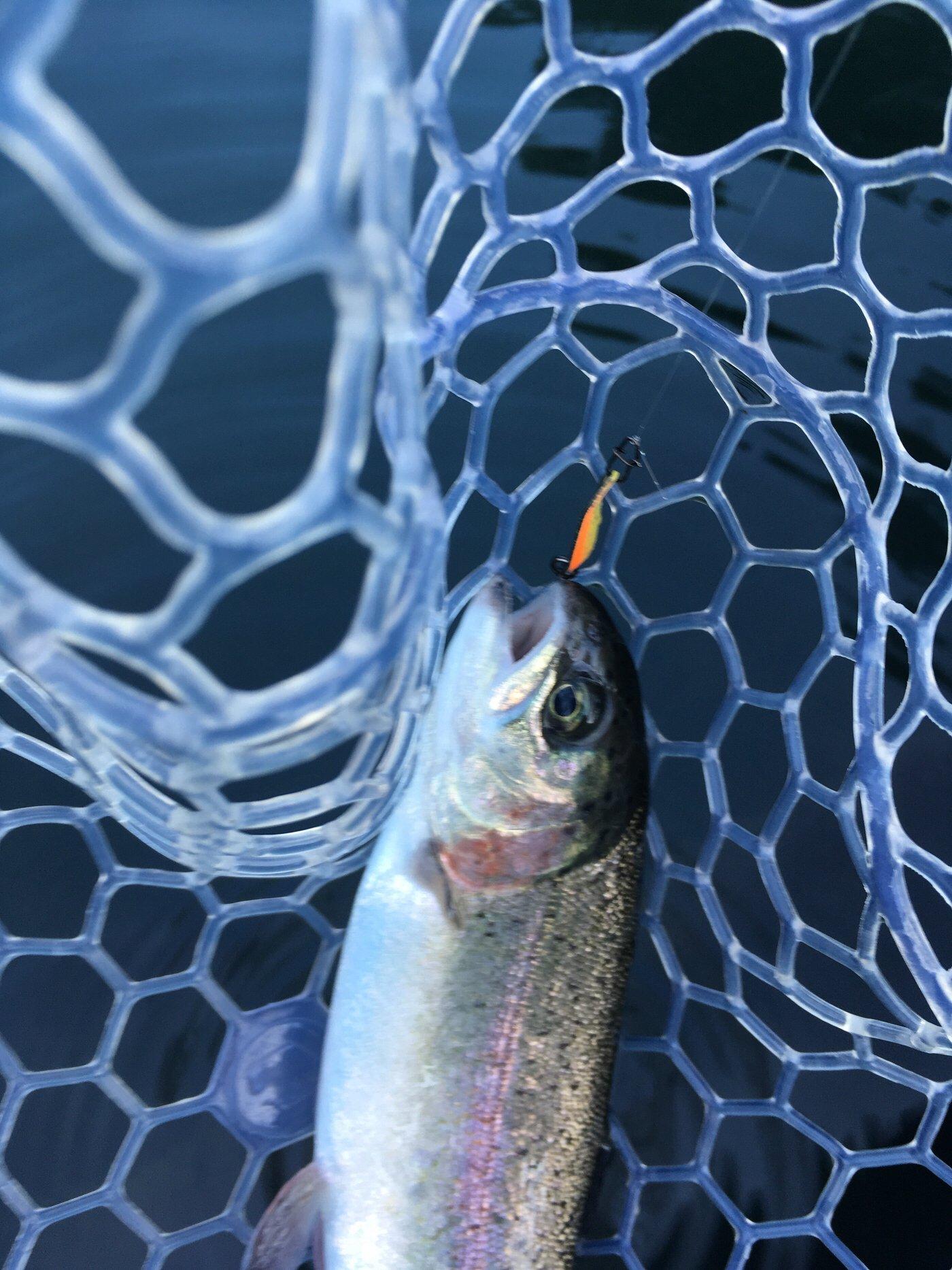 GENICRAさんの投稿画像,写っている魚はニジマス