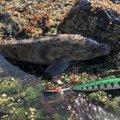 松井 祐樹さんの北海道二海郡での釣果写真