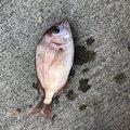りっくさんの福島県いわき市での釣果写真