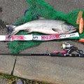 幸一さんの北海道斜里郡での釣果写真