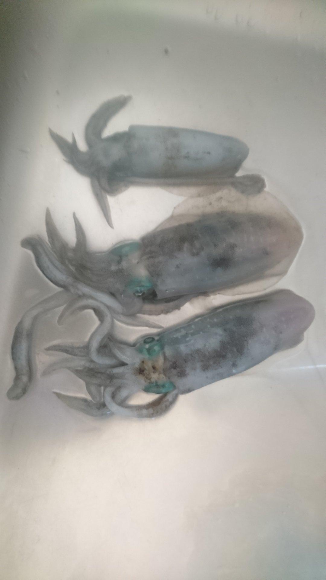 oitanさんの投稿画像,写っている魚はアオリイカ