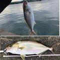 小エビちゃんさんの和歌山県西牟婁郡での釣果写真