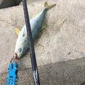 アキラさんの青森県での釣果写真