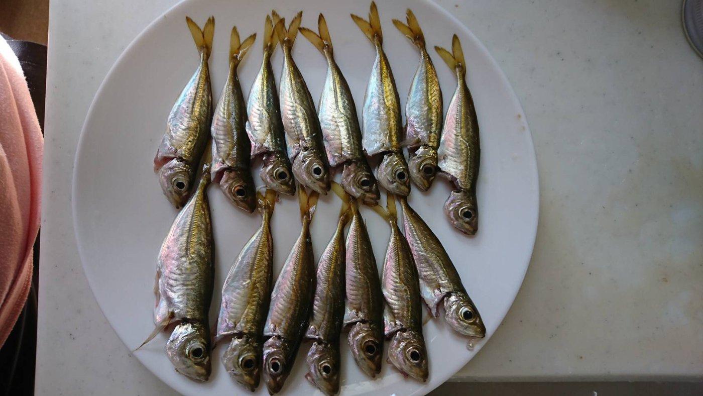 ぼんくぅさんの投稿画像,写っている魚はアジ