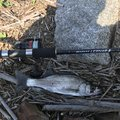 こうせいさんの鹿児島県肝属郡での釣果写真