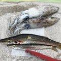 じゅんさんの新潟県岩船郡での釣果写真