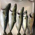 ぐらんつさんの青森県での釣果写真