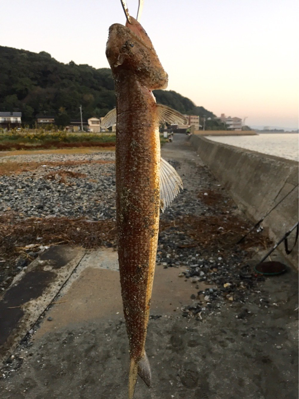 カズワタベさんの投稿画像,写っている魚はエソ