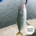 てつこさんの宮城県での釣果写真