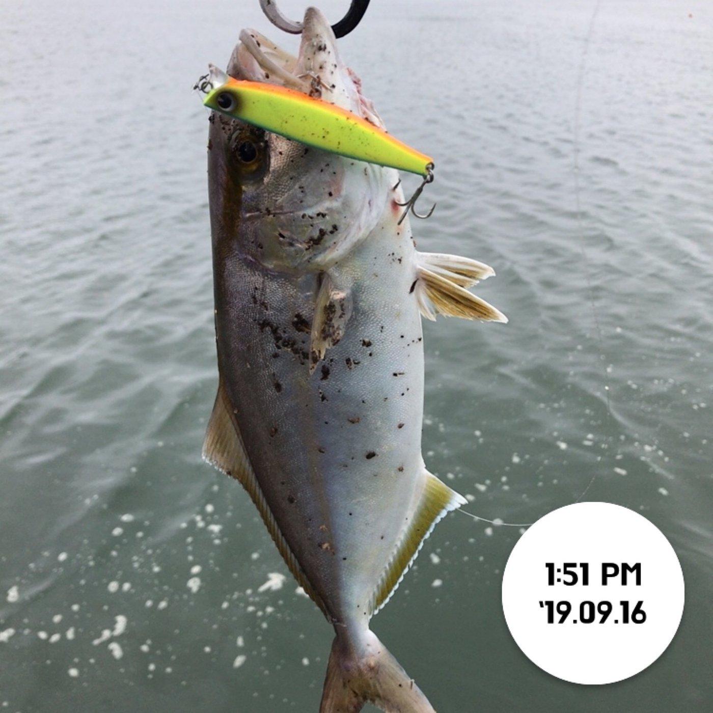 てつこさんの投稿画像,写っている魚はカンパチ