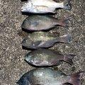 k_aさんの広島県での釣果写真