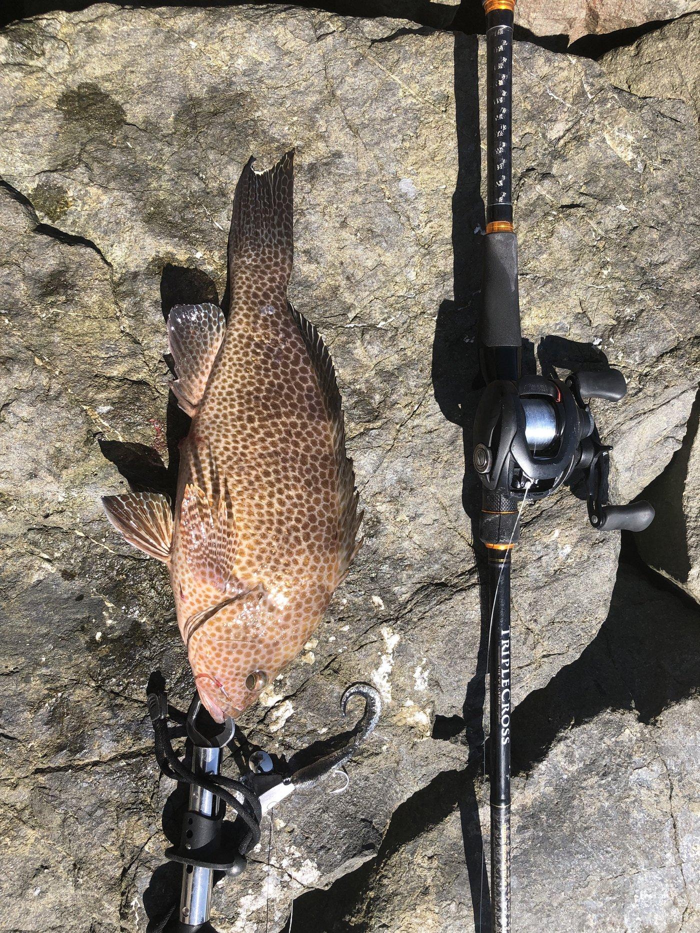 にゃん丸太郎さんの投稿画像,写っている魚は