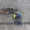 ゆうゆうさんの大阪府岸和田市での釣果写真
