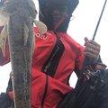 吉田のユージさんのコチの釣果写真