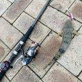 ANDYさんの茨城県での釣果写真