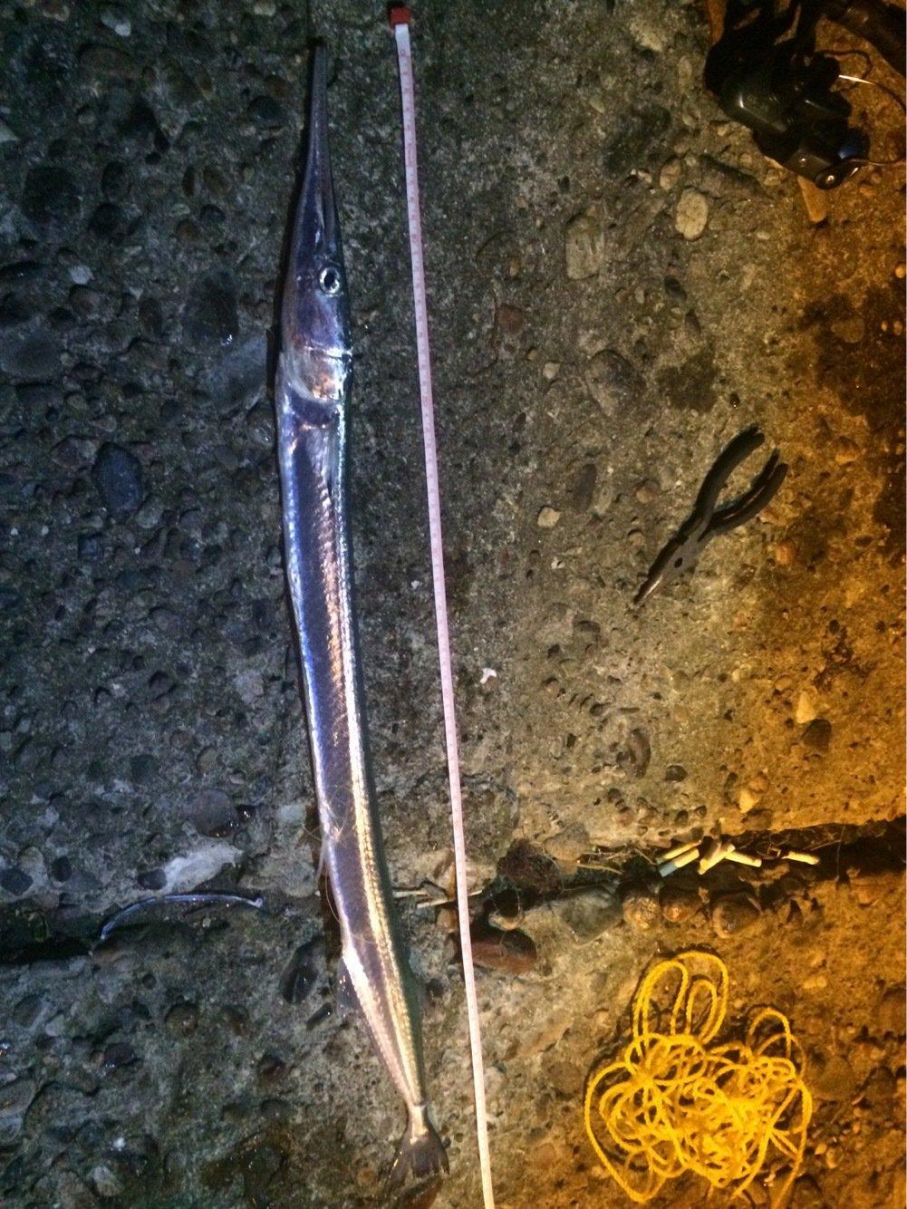 かずさんさんの投稿画像,写っている魚はダツ