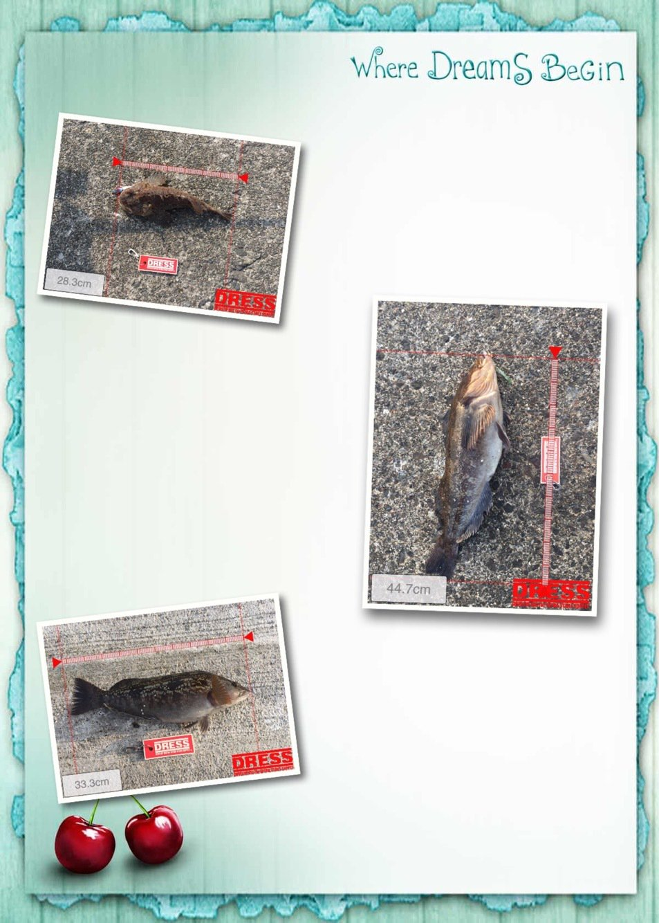 hideさんの投稿画像,写っている魚はアイナメ