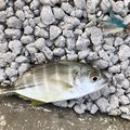 yoshiさんの沖縄県でのギンガメアジの釣果写真