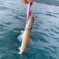 こんちさんの福井県での釣果写真