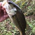 草リグさんの埼玉県草加市での釣果写真