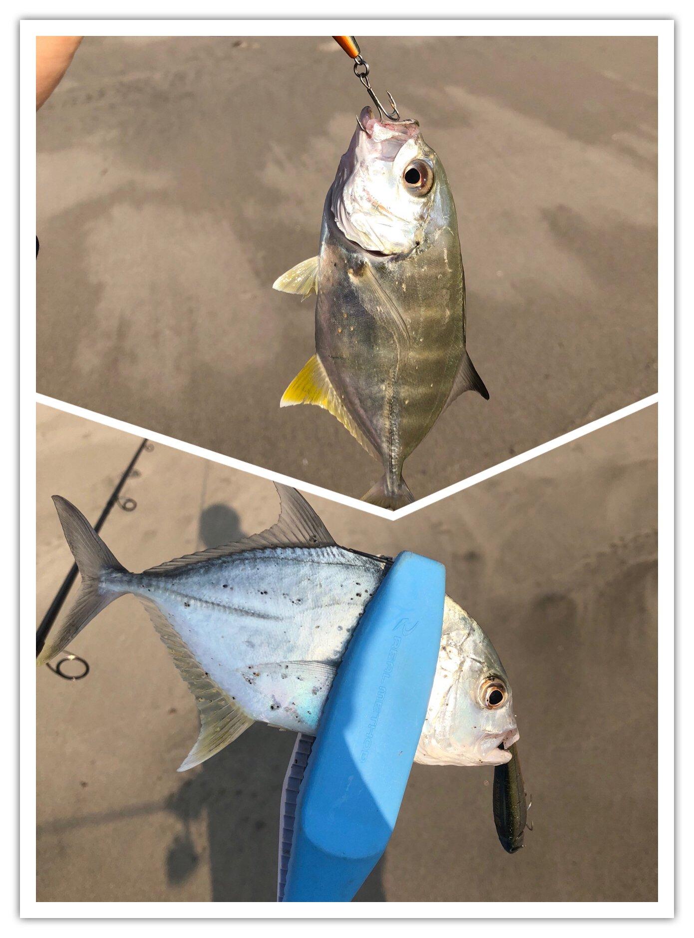 ヨウスケさんの投稿画像,写っている魚はギンガメアジ,ロウニンアジ