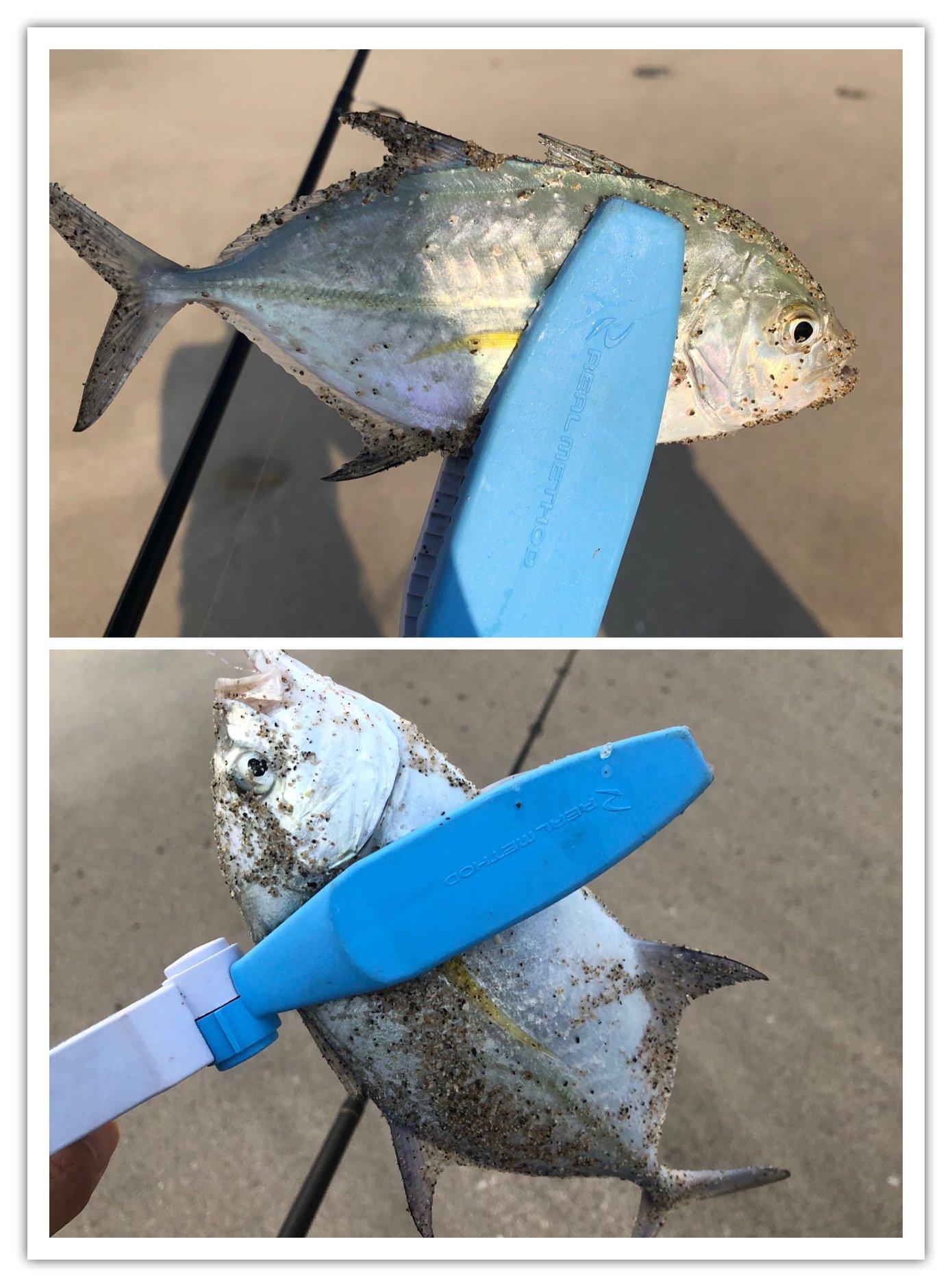 ヨウスケさんの投稿画像,写っている魚はカスミアジ