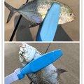 ヨウスケさんの鹿児島県での釣果写真