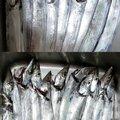 hirop-onさんの静岡県での釣果写真