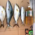 たくろうさんの宮崎県延岡市での釣果写真