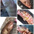 たこたかさんの静岡県での釣果写真