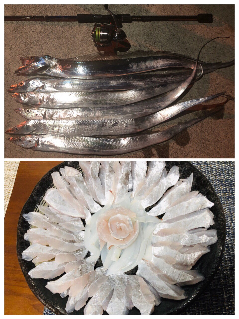 しんもっちさんの投稿画像,写っている魚はタチウオ