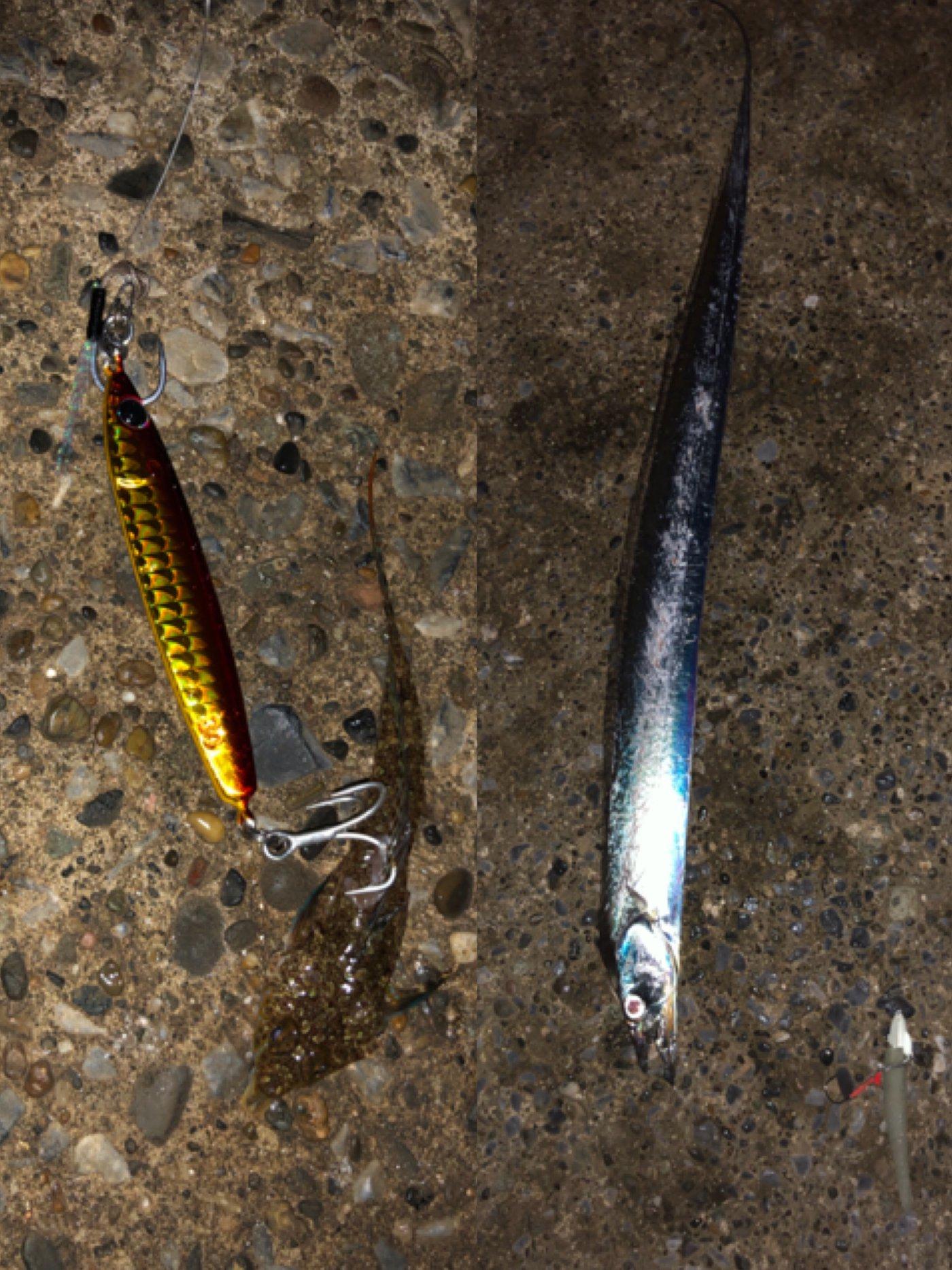 ショウ・アズナブルさんの投稿画像,写っている魚はタチウオ,メゴチ