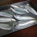 Phokaraさんの静岡県での釣果写真