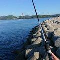 天然居士さんの兵庫県たつの市での釣果写真