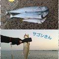 rin82さんの鳥取県での釣果写真