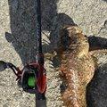 松下 真大さんのオニオコゼの釣果写真