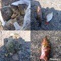 hiroさんの静岡県での釣果写真