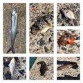 クルックさんの福岡県での釣果写真