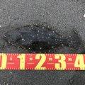 青ひげマンさんの徳島県での釣果写真