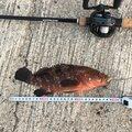 トラさんの熊本県水俣市での釣果写真