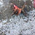 ひろしさんの宮城県での釣果写真