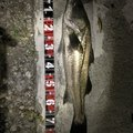 Kenさんの石川県での釣果写真