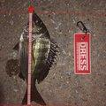 かっきーさんの福岡県での釣果写真