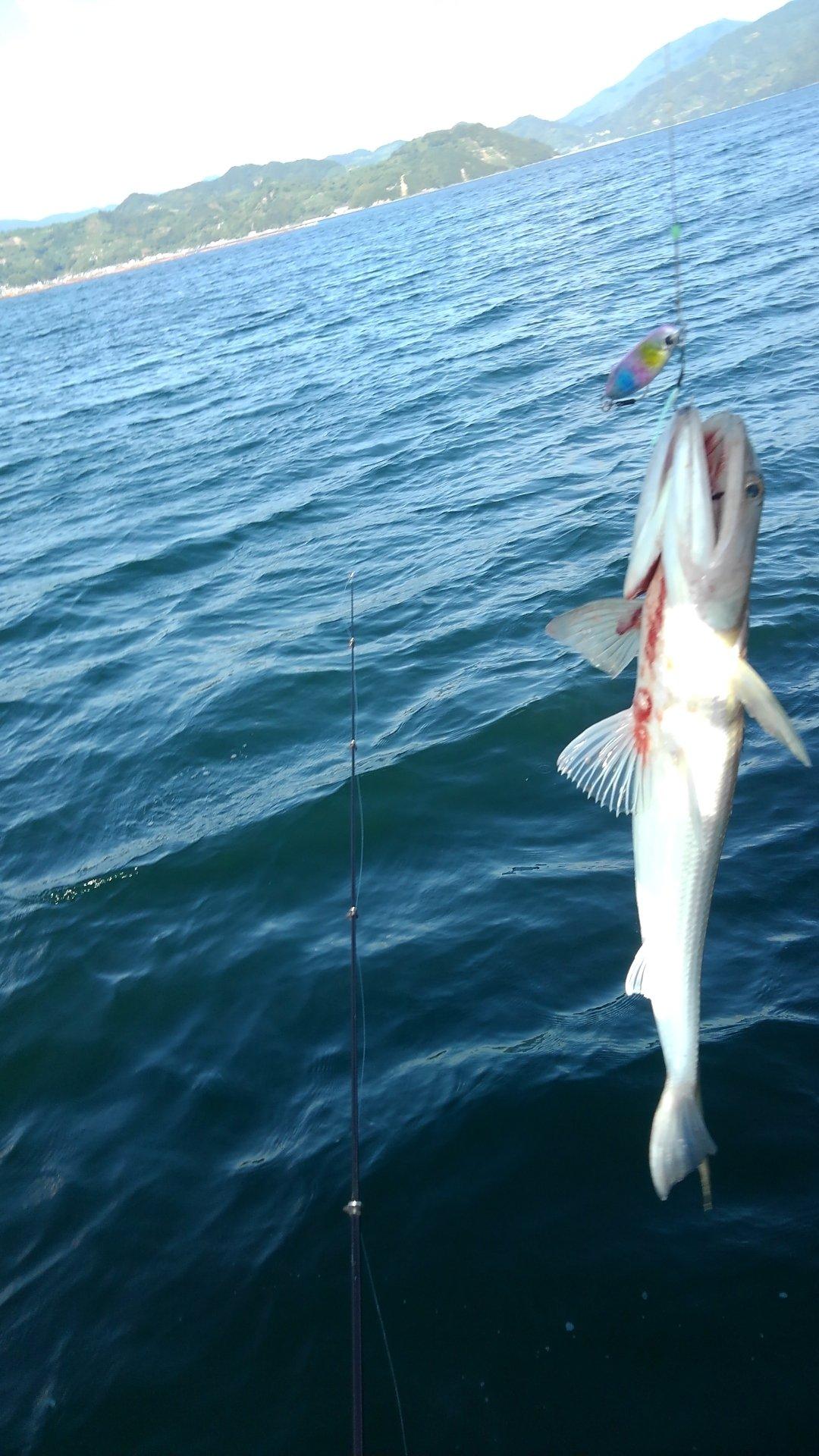 イカ釣りです。さんの投稿画像,写っている魚はエソ