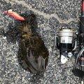 イカさんの山口県での釣果写真