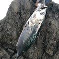 ライクさんの鹿児島県での釣果写真